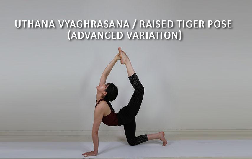 Uthana Vyaghrasana Raised Tiger Pose Advanced Variation Asana International Yoga Journal